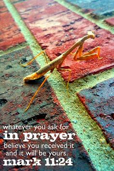 Whatever you ask for in prayer . . . believe