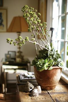 potted succulents via Habitually Chic®