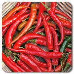 Organic Ring-O-Fire Hot Pepper