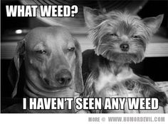 Lol if animals could only talk! Wouldnt we all be in trouble hahaha