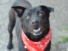 TO BE DESTROYED 8/21/14 Brooklyn Center -P  My name is SUNNY. My Animal ID # is A1010140. I am a male black labrador retr mix. The shelter thinks I am about 4 YEARS old.  I came in the shelter as a OWNER SUR on 08/11/2014 from NY 11368, owner surrender reason stated was MOVE2PRIVA.