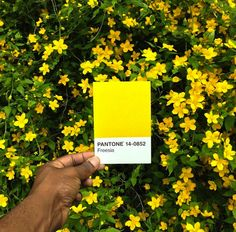 Paul Octavious' Pantone Swatch Photos: Artist Matches Colors To Everyday Life Scenes (PHOTOS)