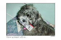 2000, Miss Belle was goin' shoppin' - JhC #Dog #Pet