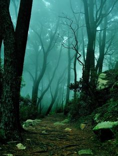 The Mystic Forest, Sintra, Portugal <== i have been here... it is special