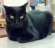 Browser the Library Cat -- Pine River Public Library, MN