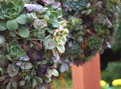 DIY Succulent Orbs. succulent plants, backyard, succul ball, garden, yard ideas