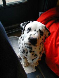 cute little face!