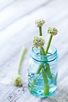 """""""Onion Flowers"""" by Helen of Tartelette. #tartelette #helen #photography #onion #flowers #blue #green #glass"""