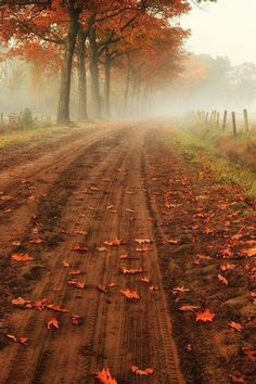 Country road in Belgium