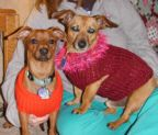 Pippin, Sparky, and Frank will love these sweaters!
