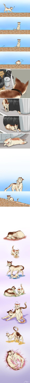 A Cat's Life by x-Lilou-chan-x on deviantART. Neko Hetalia Spain x S. Italy