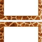 FREE These are animal print posters in portrait format.  There are:snakealligatorzebracheetahtigergiraffe...