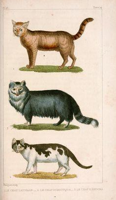 1830 illustration