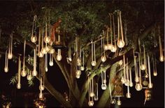 tea lights in the trees