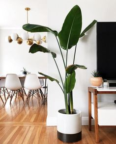 From the classic fiddle leaf to the un-killable snake plant.