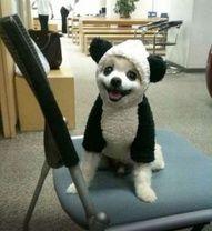 Do I look like PO the Panda?