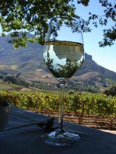 Stellenbosch vineyard, South Africa ... my 25th birthday filled full of wine and sunshine