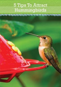 Invite beautiful hummingbirds to your garden with our 5 tips.