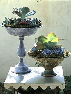 DIY- Vintage Container Gardens. More ideas for succulent container gardens: http://www.midwestliving.com/garden/container/easy-succulent-container-gardens/