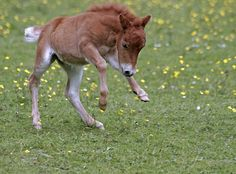 would love to have a miniature horse