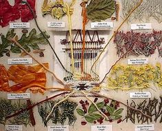 Plants for dyeing fabric