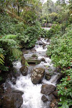 ☀  Puerto Rico ☀ Along the river in El Yunque National Park Puerto Rico