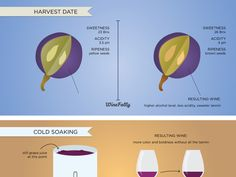 6 Wine Making Processes & How They Affect Wine