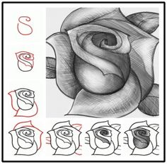How to Draw a Rose DIY