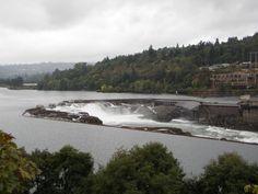 Willamette Falls in Oregon City blue heron, paper, offic