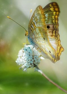 Ethereal Butterfly by Anne Kitzman