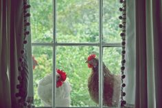 Chickens in the window