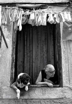 windows and animals, dogs, black white dog photo, wash, italian photos, italian lifestyle, italian photography, photographi, italian black and white photos