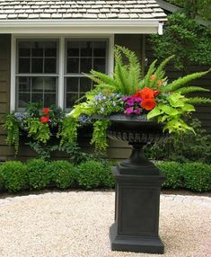 Love the fern in planting...would be good on front porch...very little sun.
