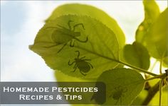 If you're a do-it-yourselfer, check out these recipes for homemade pesticides.
