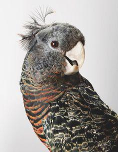 Wild Cockatoos byLeila Jeffreys