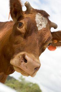 Raw Milk Facts