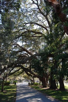 Jekyll Island, Georgia - Love these trees.  I remember a day in the past where we walked under these trees along the sidewalks of Jekyll.