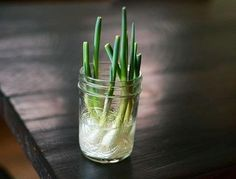 Here are 10 vegetables and herbs you can buy once and regrow forever.   The Best Article Every Day craft painting, herb, bulbs, stem, kitchen, music books, green onions, regrow green, the roots