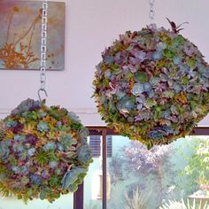 Succulent balls.