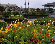 Pier 39 / Fisherman's Warf - San Francisco - Raised flower beds and all their bright colors always add great curb appeal to any retail / restaurant / café space!