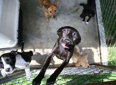 Grateful Dog benefit returns to Florence