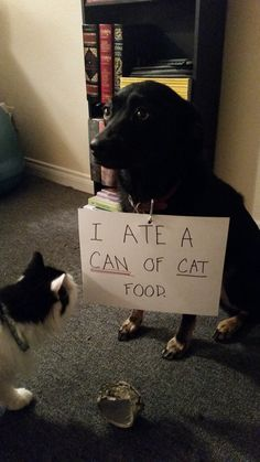 I ate a can of cat food.