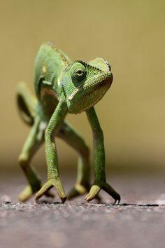 """""""Chameleon"""" by Burak Dogansoysal"""
