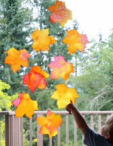 Gorgeous Fallen Leaves Suncatchers- you won't believe what household material these are made of! Seriously stunning. | AllFreeKidsCrafts.com