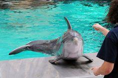 kiss, anim friend, sea life, feed dolphin, favorit anim, dolphins, summer, thing, precious life