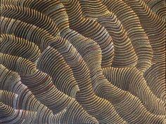 aboriginal © Maureen Hudson Nampijinpa