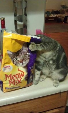 silly kitty