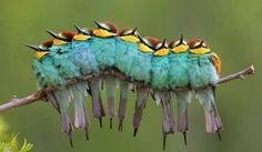 Cute, fuzzy little caterpillarrr... Wait, What?!