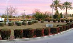 What Keeps a Landscape From Being Sustainable? Over-planted and over-pruned shrubs.