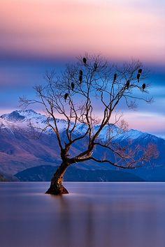 ✯ Lake Wanaka - Otago, New Zealand